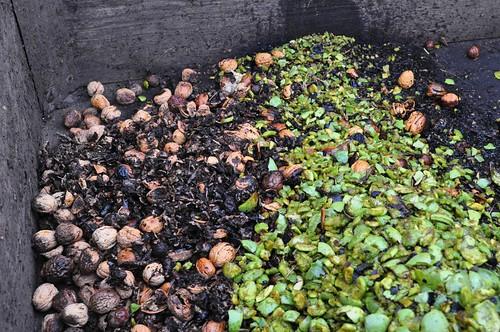 walnut shells and skins