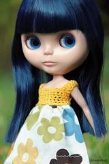 Autumnal Daisy