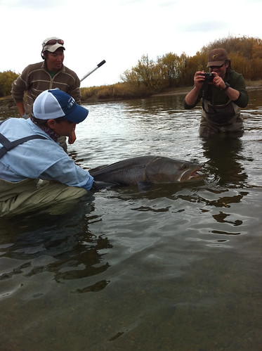 Mongolian Monster