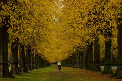 Biking down Lime Tree Avenue in the Autumn (ebygomm) Tags: autumn fall yellow biking nottinghamshire 2010 clumber limetree limetreeavenue