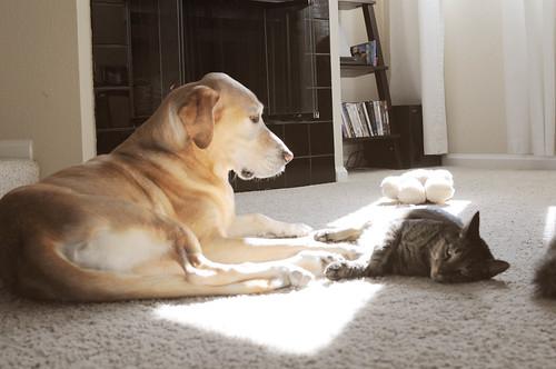 sharing the sun spot