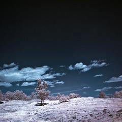 Zapotecas IR (2010) 08 (cguevara_aguilar) Tags: cielo árbol infrarojo zapotecas ‡rbol rbol procesadas zapotecasir