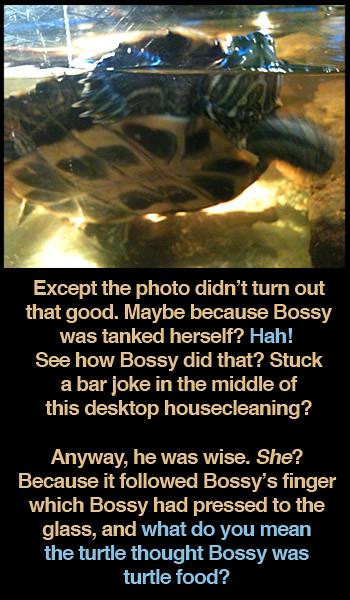 bar-turtle