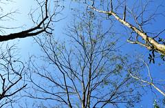 Hoa đào (TuanPhan.Photography) Tags: sapa làocai hoađào tâybắc hàmrồng vườnhồng ruộngbậcthang phốnúi dântộcdao nhàthờsapa