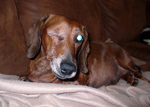 2010-11-13 - Ralphie - 0001