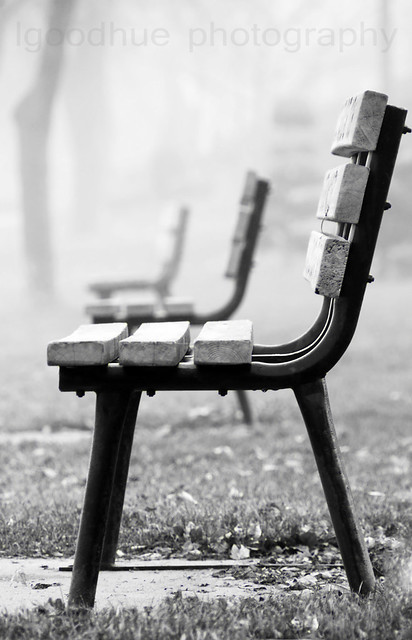 Fog and bench