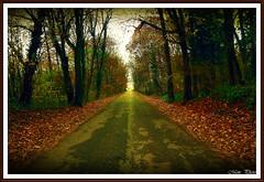 Breathe (Mem Foto) Tags: alberi bosco udine friuliveneziagiulia canoneos7d fontanabona mem7672 samyang14mm28umc