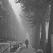 Early morning winter fog, Randolph Avenue, Maida Vale - Click thumbnail for image options