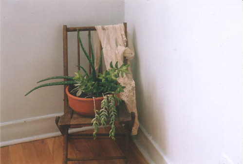 chair and plants