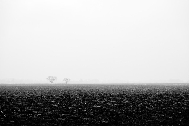 2 trees in fog