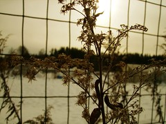 Winter 1 (Klavs) Tags: winter sun snow fence latvia valmiera latvija oldgrass