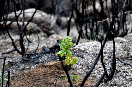 Reflorestar Serra Estrela