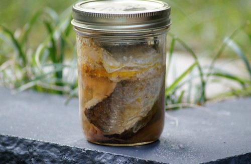 Canned Mullet