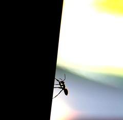 Assim devera eu ser: de patinhas no cho, formiguinha ao trabalho e ao tosto  EXPLORE (Nay Hoffmann) Tags: insect ant inseto rise subida challenges desafios formiga