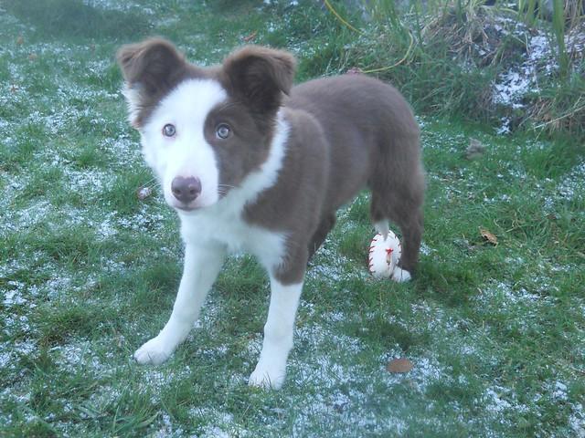Snow 2010 (57)