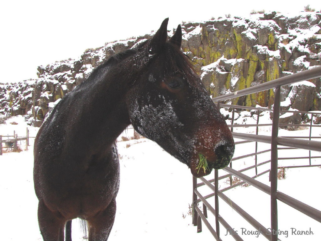 Colt's Roll in the Snow at Dawn