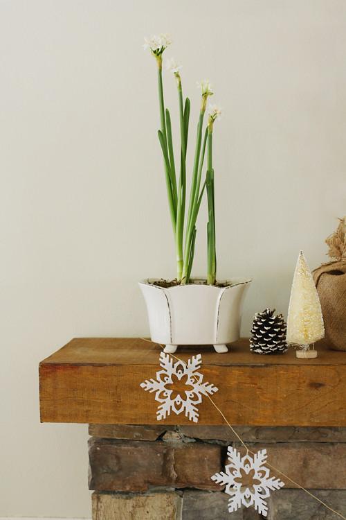 paperwhites & snowflakes
