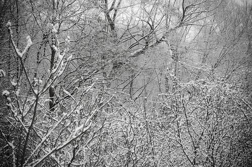 36:365冬季森林