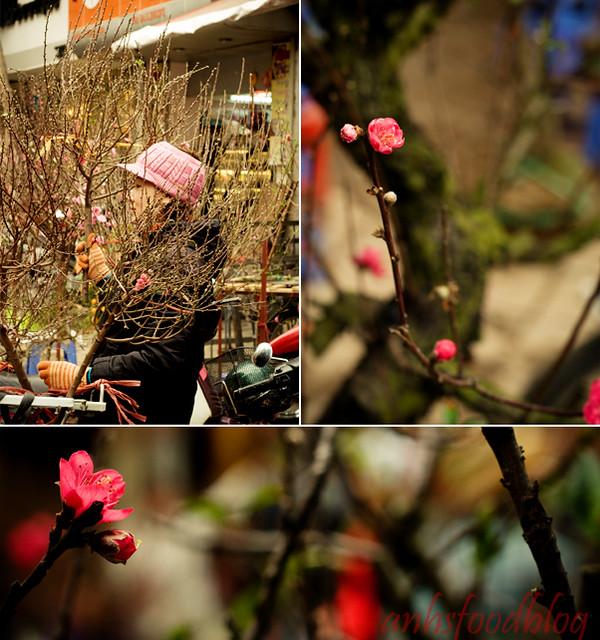Plum blossom in Hanoi