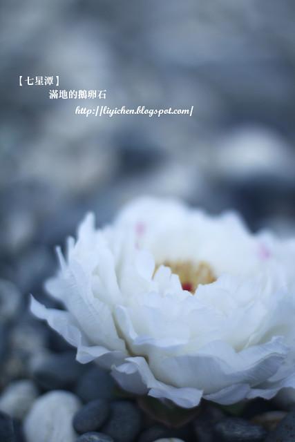 1_MG_5419