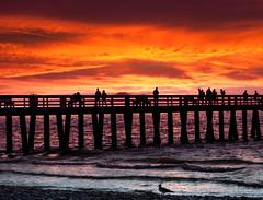 sunset watchers (marianna_a.) Tags: fence friday hff sun sunset pier naples florida usa silhouettes ocean sea mariannaarmata p3230198 gull waves