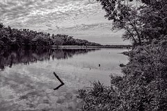 Claremore, OK  BW (brev99) Tags: d7100 sigma1770os claremore hike lake trees reflections blackandwhite perfecteffects17 ononesoftware on1photoraw2017 topazdetail nikviveza viewnx2 cacorrection cloudy landscape