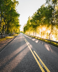 Summer evening (Nippe16) Tags: summer road tree sunset gold golden outdoor finland suomi birch sun warm tones landscape