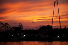 Skycoaster, Indiana Beach, Monticello, Indiana (Roger Gerbig) Tags: indianabeach monticello indiana lakeshafer amusementpark resort boating rogergerbig canonef24105f4l canoneos5dmkii skycoaster waterpark boardwalk