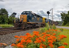 CSX 8181, Rushsylvania, OH (Wheelnrail) Tags: csx csxt emd sd402 ohio train mount victory subdivision signal conrail rail road railroad locomotive flower