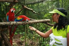 Beatrice feeds a young macaw