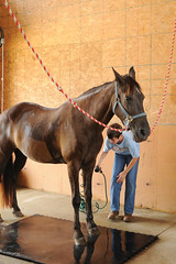 washing Shalamar (Montgomery Area Nontraditional Equestrians (MANE)) Tags: al mane pikeroad