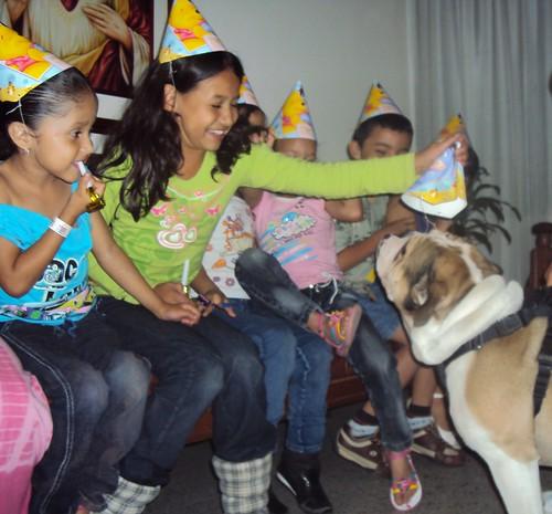LE CELEBRAN CUMPLEAÑOS A BULL DOG (B)