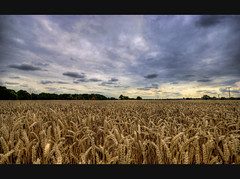 Blanket over the Wheat Fields