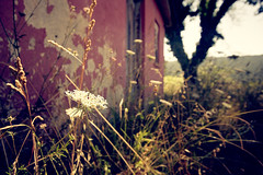 (t3mujin) Tags: travel red plants sun house flower tree abandoned portugal warm dry vegetation ligh coutryside d90