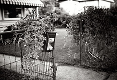 ivy gate, redux (mike thomas) Tags: city 120 lab mine downtown shoot fuji place delta 200 walkabout scanned 100 apug developed littleton gw690iii lens1 r00012