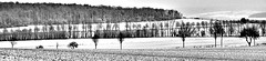 Panorama - 2005-12-26 Klein Schneen  Landschaft im Schnee (Andreas Helke) Tags: 2005 schnee winter bw panorama snow nature canon germany top20favorites landscape deutschland europa europe y fav dslr landschaft canoneos350d picnik twa pp 1205 fav2 niedersachsen candreashelke kleinschneen lc100 2005122710 2005123115 worldsfavorite hrslideshow haslargesize 2006091656nogroups 60goups 2006091792 donothide oldstileoriginalsecret fav2andmore popularold upload2010