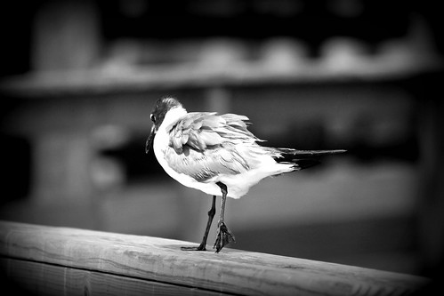 Bird on Pier II