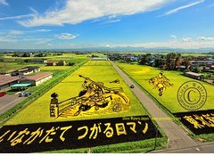 Rice Art Autumn View.  Glenn E Waters. Japan.  Over 13,000 views of this photo. (Glenn Waters in Japan.) Tags: japan japanese nikon aomori  ricefields japon   inakadate d700 nikond700  glennwaters nikkorafs1424mmf28 riceart photosjapan tamboart