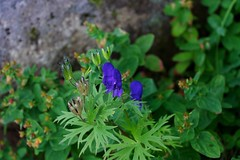 きれいな花には……