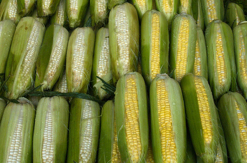 White/Yellow Corn
