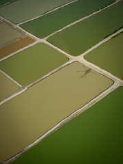 Flooded ponds (Lil [Kristen Elsby]) Tags: pakistan shadow abstract green topf25 water work landscape asia aerial fromabove helicopter editorial punjab emergency ponds topv4444 floods irrigation reportage flooded naturaldisaster southasia cropland lx3 muzaffargarh panasoniclumixlx3 irrigationponds pakistanfloods monsoonfloods 2010pakistanfloods