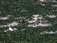 Gombák Dobogókő után