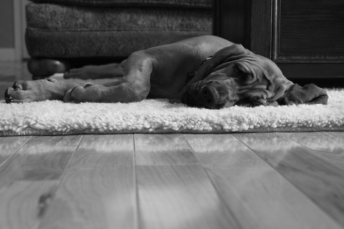 Lazy Dixie
