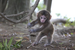 Pretty pose (Masashi Mochida) Tags: baby cute japan monkey pretty awaji naturesfinest coth supershot abigfave impressedbeauty newacademy rubyphotographer