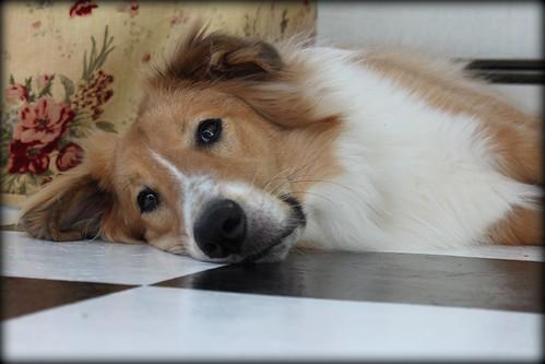 Reggie lazing