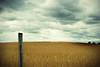 FIELD of BEANS (jumpinjimmyjava) Tags: storm art weather landscape beans farmers farm crop dreams jlbrown jumpinjimmyjava photophotograph