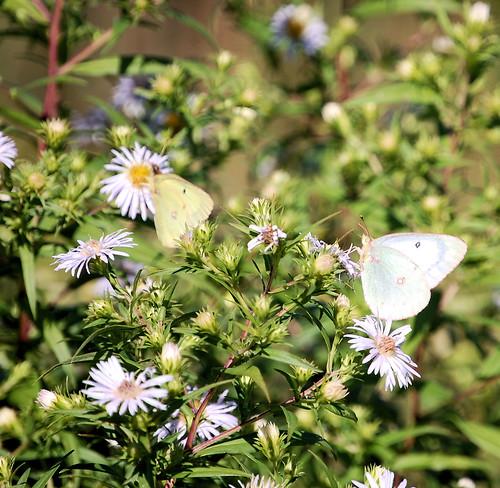 Two Flutters Along Preston Harmony Trail in MN