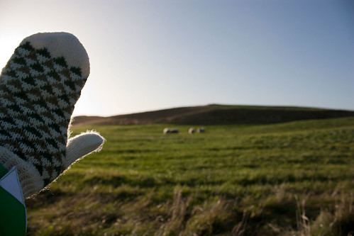 new mittens * sheep