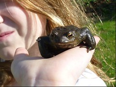Amphibien in der Umgebung einer Großstadt