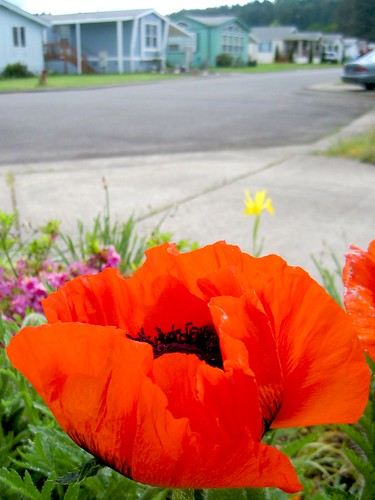 Shalimar Flowers